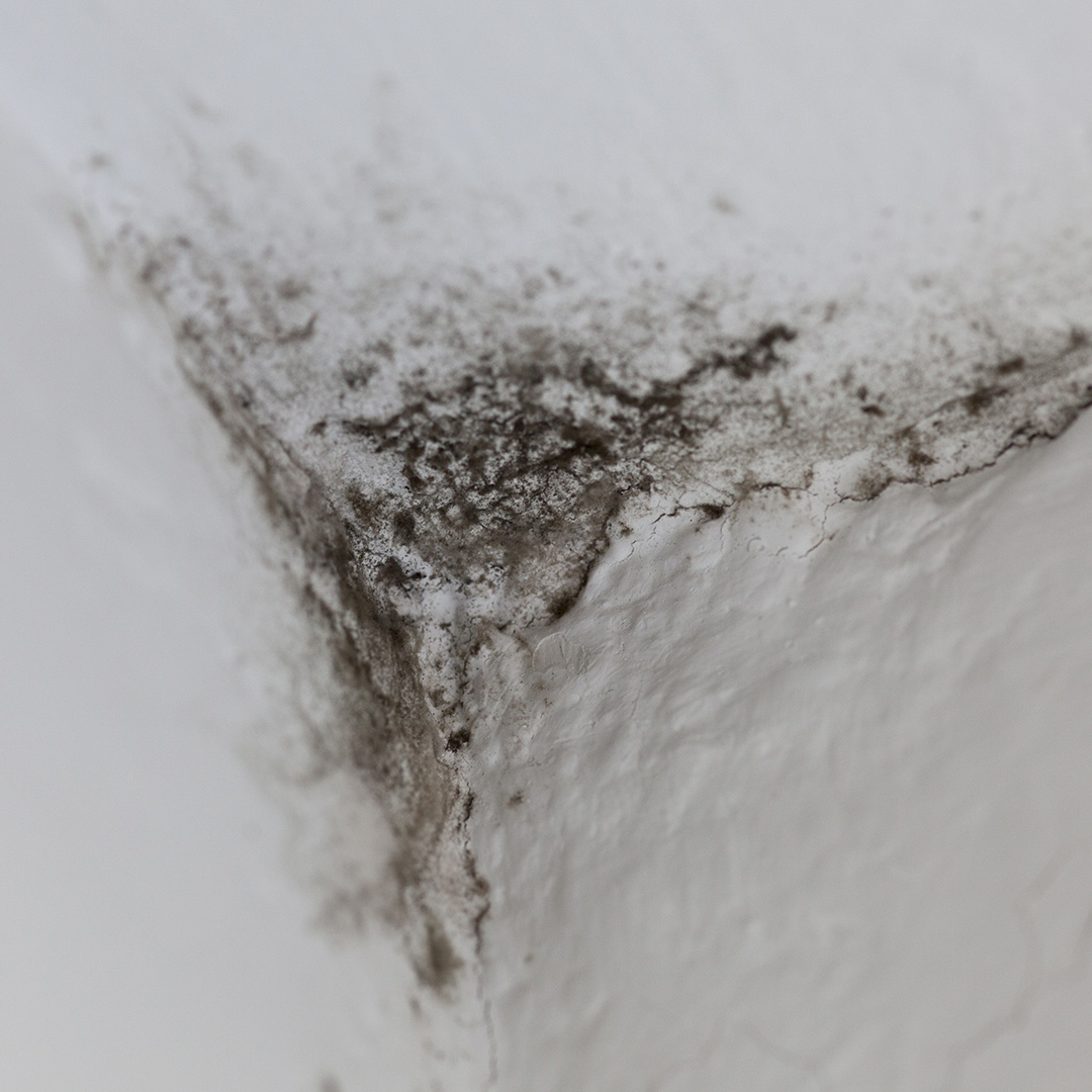 American Air Heat How To Spot And Get Rid Of Mold In Your Home Thumb